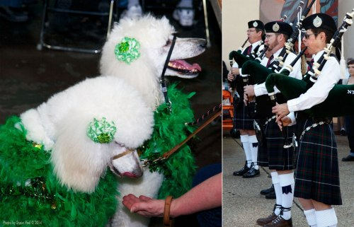 "This years theme was ""Erin Go Bark"" with special attention being paid to the many wonderful dog breeds of Ireland.  As always the North Caledonian Pipes and Drums (right) were on hand to keep things 'regimental'."